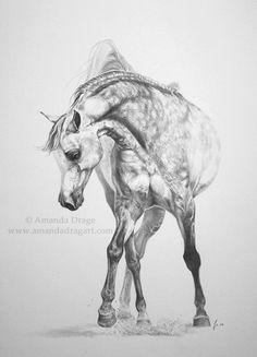 """Ballet Dancer"" Arabian horse drawing in pencil, by Amanda Drage"