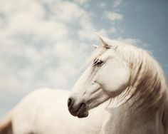 White Horse Art, Camargue Horse Photography, Blue Sky Clouds, Spring Fairytale, Dreamy Pastel Spring Wall Decor - Wild is the Wind All The Pretty Horses, Beautiful Horses, Animals Beautiful, Equine Photography, Animal Photography, White Photography, Nature Photography, Poetry Photography, Wild Is The Wind