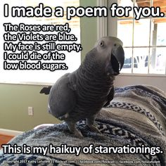 Training Your Pet Parrot Parrot Pet, Parrot Toys, Caique Parrot, Funny Animal Photos, Animal Memes, Parrot Quotes, Senegal Parrot, Funny Parrots, African Grey Parrot