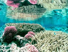 Coral reefs play an important role in helping to maintain the balance of marine ecosystems. Unfortunately, they are depleting at an alarming rate.