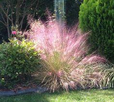 A Walk in the Garden muhly grass light