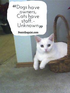 Cat Quote http://pentriloquist.com