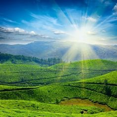 Find Tea Plantations Sun Kerala India stock images in HD and millions of other royalty-free stock photos, illustrations and vectors in the Shutterstock collection. Munnar, Matcha Health Benefits, Kerala India, Hill Station, Travel And Tourism, Tourism India, Great Pictures, Places To See, Scenery