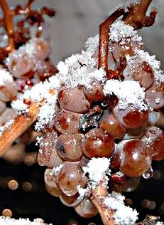 Discover Ice Wine in : Pressed from frozen grapes, this prized wine was a sweet accident. Wine Images, Frozen Grapes, Cash Crop, Good Find, Wine Delivery, Fermented Foods, Fruit, Sweet, Dessert Wine