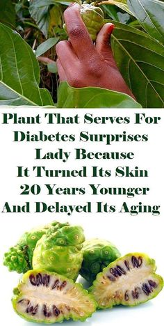 Plant That Serves For Diabetes Surprises Lady Because It Turned Its Skin 20 Years Younger and Delayed Its Aging – Avocado Healthy Nutrition Healthy Women, Healthy Tips, Healthy Food, Healthy Fruits, Stay Healthy, Health And Beauty Tips, Health Advice, Healthy Habbits, Back To Nature