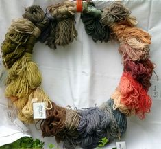 normal range of British natural dye samples that could be obtainable by Vikings using firbog clubmoss in Viking dyeing sites. This plant naturally accretes alum in it's roots