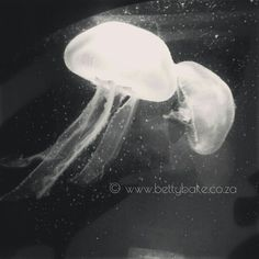 """Treating #PCOS w Food & Supps on Instagram: """"#jellyfish at the two oceans #aquarium @vandawaterfront"""" Jellyfish, Treating Pcos, Aquarium, Two By Two, Gluten Free, Ocean, Treats, Health, Instagram Posts"""