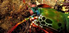 Ambiente: #Animali del #mare profondo: quelli più strani e assurdi (link: http://ift.tt/2dP5FYm )