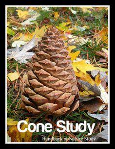 Handbook of Nature Study: Autumn 2010 OHC #9 Pine Cone Study
