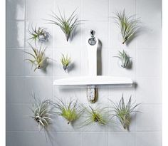 Suction Succulent Perfect For Bathroom Walls