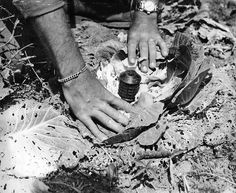 Cabbage Mine, circa April 1945 by Marine Corps Archives & Special Collections, via Flickr. This explosive device was concealed in a head of cabbage on Okinawa. Such booby traps were prevalent and highly dangerous.    From the Photograph Collection at the Marine Corps Archives and Special Collections.    OFFICIAL USMC PHOTOGRAPH