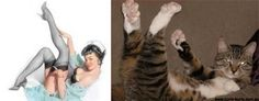 Cats That Look Like Pin-Up Girls (24 Pics) | Pleated-Jeans.com