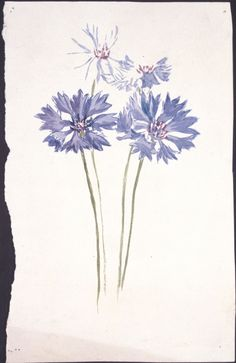 Beatrix Potter flower illustrations.