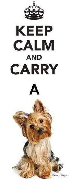 Carry a Yorkie.