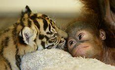 Удивительная и невероятная дружба животных
