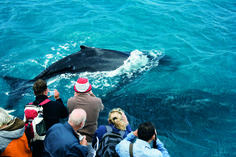 Read about the Whale Watching at Brisbane's Moreton Island and view all our Brisbane Tours that will take you to experience this Fraser Island, Island 2, Four Wheel Drive, Whale Watching, Brisbane, Tours