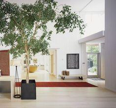 Biophilic design with indoor tree