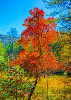 Red Tree by John M Bailey #art #tree #Autumn #nature  Touching Light Photography - johnbaileyphotoart.com