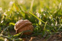 Walnut by Csibu83