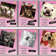 Little something different for #findingfureverfriday. We are going to try to help a whole bunch of our friends in need so please SPEAD THE WORD!  Check out our friends at Snooty Giggles Dog Rescue winners! How awesome are these!  Now it's your turn!  Get your dog on a bottle of Real Dog Rescue Wine which will be available to be shipped all over the country! Here is how you enter: 1. Send your picture and write up as you want it to appear to fundraising@realdogrescue.org by 7/2/17 Rules for…