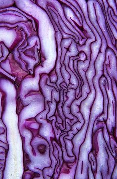 Texture and pattern: Red Cabbage by Phillip Gates. Patterns In Nature, Textures Patterns, Color Patterns, Texture Photography, Abstract Photography, Pattern Photography, Food Photography, Natural Forms, Natural Texture