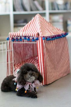 Maybe not a circus cover, maybe like a princess cover or something....This DIY Circus Kennel Cover Project is for Dog Lovers Only trendhunter.com