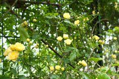 Spring blooms in Civita di Bagnoregio