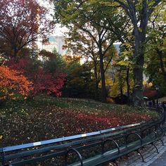 fall in central park #nyc