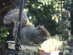 April 10th - squirrel (or other small wild animal). Cyril our squirrel, the only one we ever see in our garden.