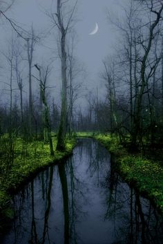 Moonglow Forest