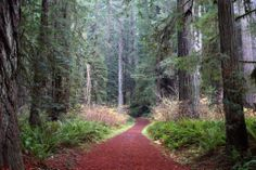 Redwood National and State Parks - Google Maps
