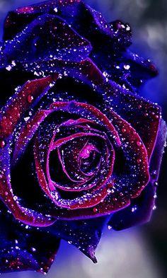 blue flower wallpaper Bebe Tutorial and Ideas Beautiful Rose Flowers, Beautiful Flowers Wallpapers, Rare Flowers, Pretty Wallpapers, Amazing Flowers, Purple Flowers, Red Roses, White Roses, Red Flower Wallpaper