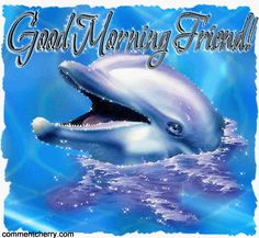 Dolphin Photos, Dolphin Art, Water Animals, Animals And Pets, Funny Animals, Good Morning Wishes Friends, Good Morning Gif, Tiger Images, Dolphins Tattoo