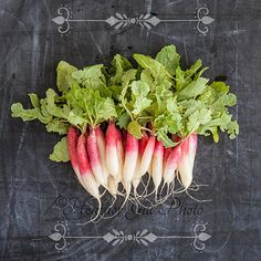 French Breakfast Radishes - Farmers Market Series - Square Format Fine Art Photo by Heather Gill Photography