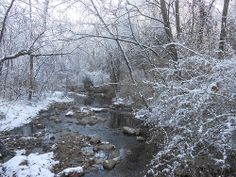 Flat Branch Creek Picture a Day, Tunnel of Love, December 15th 2013, just realized I never posted yesterday's pics