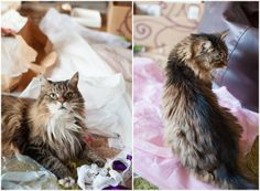 My Photography Diary: My Baby Dee – Christmas 2013 - cat