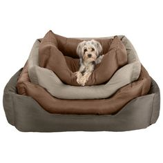 STAINMASTER Comfy Couch Dog Bed & Reviews | Wayfair