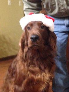 Charley Loves Santa Claus!