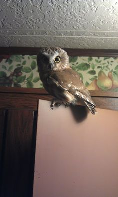 I wouldn't be sad if a cute little owl flew into my house... ^_^