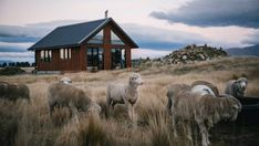 Mackenzie Basin's High Country Cabin offers a stylish and comfortable winter escape Moving To New Zealand, Off Grid House, Local Eatery, New Zealand South Island, Relaxing Holidays, Light Pollution, Farm Stay, Through The Window, Dark Skies