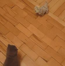 Chuck norris cat