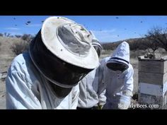 Dee Lusby Organic Beekeeper 2013 Bee Colonies Disappearing http://m.youtube.com/watch?feature=player_embedded&v=oJ5riRX1_3w&desktop_uri=%2Fwatch%3Ffeature%3Dplayer_embedded%26v%3DoJ5riRX1_3w
