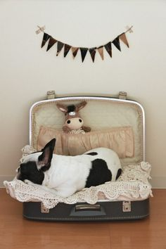 dog bed- I have this suitcase but I know daisy would just eat it lol not like she knows such think as a dog bed!