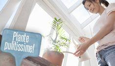 Insetticida naturale: come farlo in casa con il sapone di Marsiglia | Giardinieri in affitto