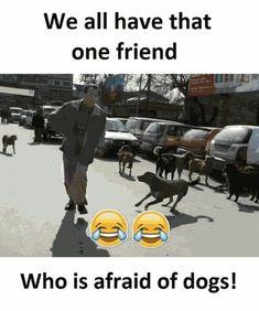 Me ...hahahaha.....what hahahahaha. I saw your dog the other day. What breed ?