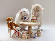 The real-life Sylvanian Families! Photographers uses pet rats to create everyday human scenes  This picture of two of the rats sharing afternoon tea was the photographer's clear favourite