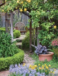 i want something like this between my house and garage leading into the backyard. minus what looks like lemons, because they can't grow in zone 5.