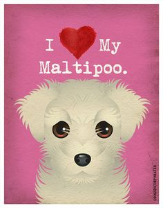 Hey, I found this really awesome Etsy listing at http://www.etsy.com/listing/101952103/i-love-my-maltipoo-i-heart-my-maltipoo-i