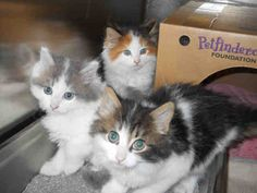 Snickers, Sweet Marie and KitKat