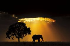 They are all entries for the natural world and wildlife categories in the 2017 Sony World Photography Awards - the world's largest photography competition. World Photography, Photography Awards, Somerset, Wildlife Day, Amazing Nature Photos, Padre Celestial, Famous Pictures, Photography Competitions, Elephant Love